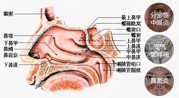 鼻腔到胃部结构图